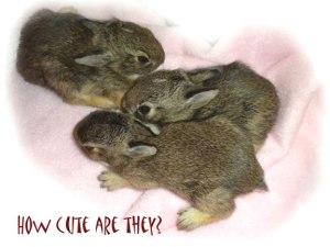 bunnies_0410b
