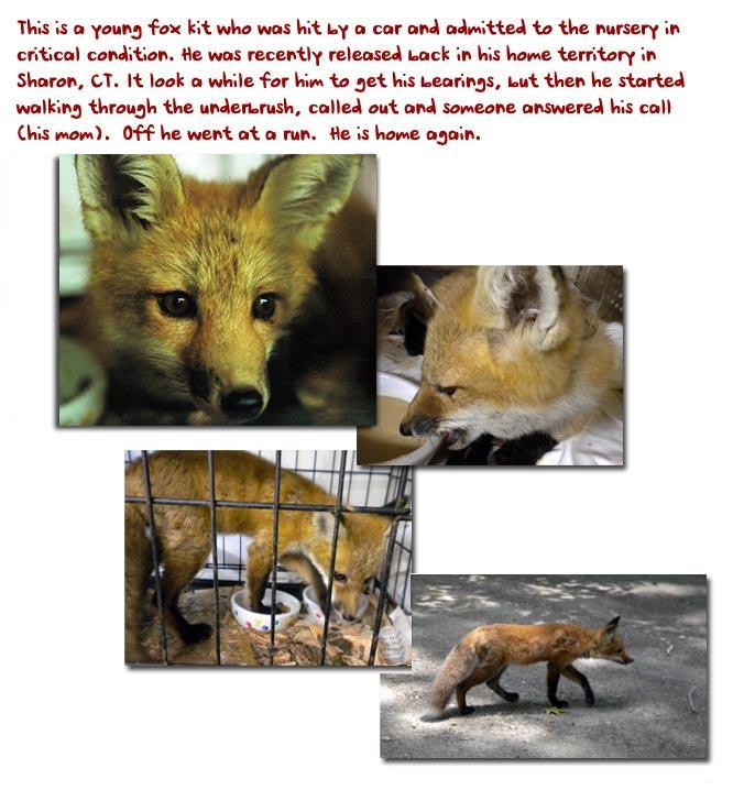 fox_montage3