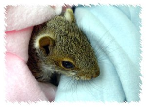 squirrel_baby_2010
