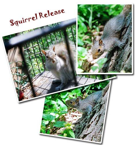 squirrel_release